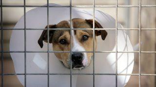 Что делать, если вы подозреваете кого-то в жестоком обращении с животным