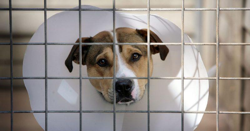 Лайфхаки и советы: Что делать, если вы подозреваете кого-то в жестоком обращении с животным