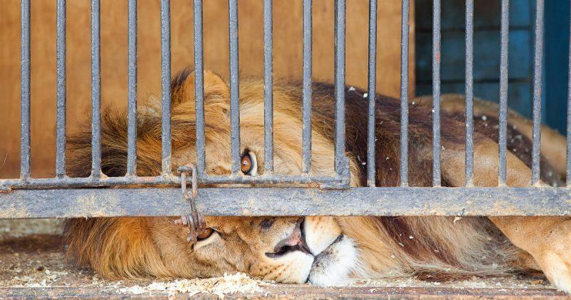 Закон и право: Британским циркам запретят использовать диких животных для представлений