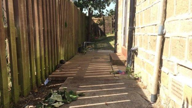 Бультерьер загрыз мужчину в Западном Йоркшире рис 2