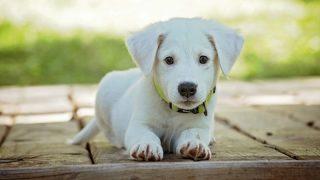 Владельцы собак требуют изменить законодательство о похищении домашних животных