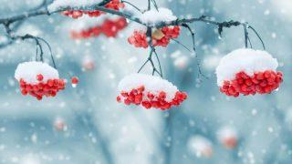 Британию ожидают морозы, которые принесут с собой снег