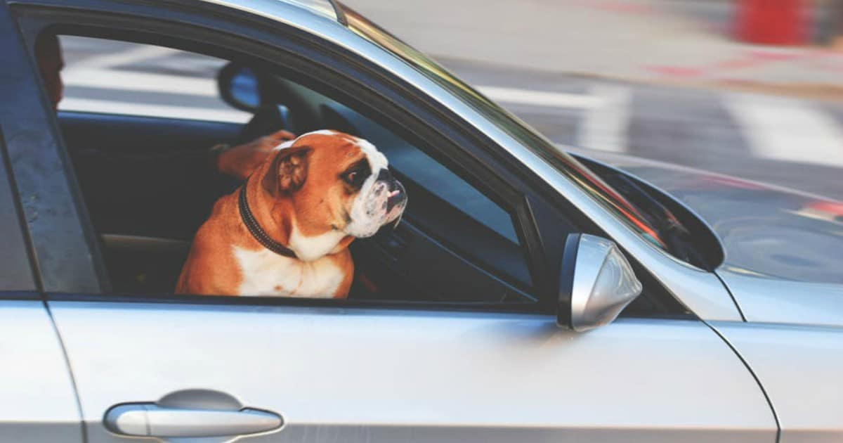 https://www.pexels.com/photo/adorable-adult-animal-automotive-236452/