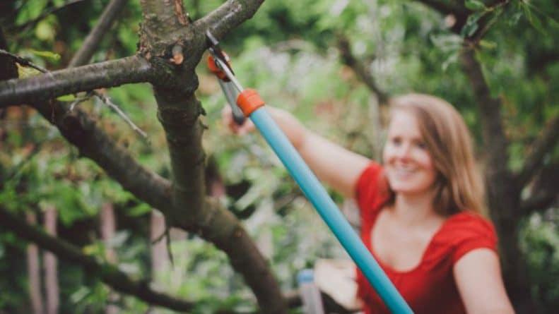 Закон и право: Вы можете нарушать закон в собственном саду: 8 вещей, которых вам нужно избегать, чтобы не провоцировать соседа
