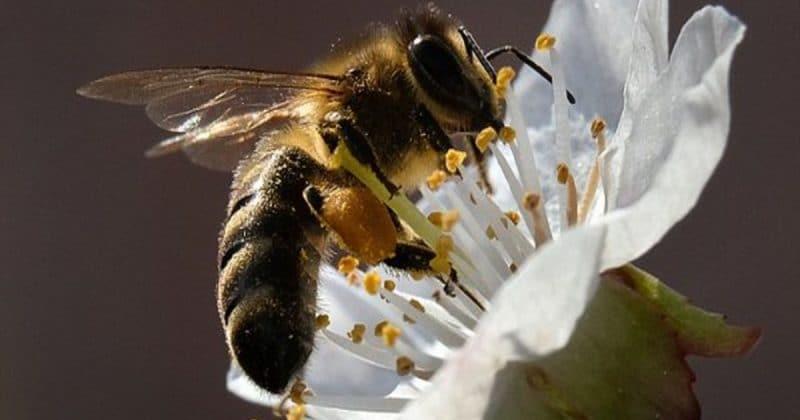 Общество: ЕС запретили самые популярные в мире пестициды ради спасения пчел