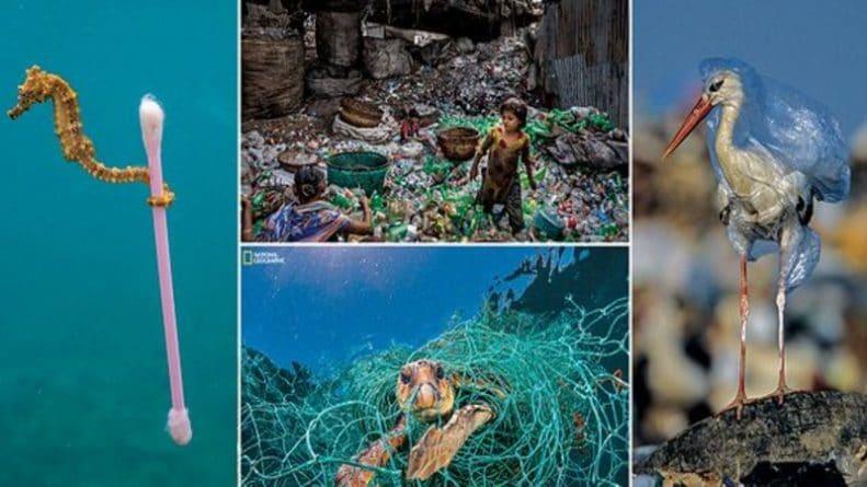 Общество: National Geographic представил шокирующие фотографии влияния пластика на морских обитателей и экосистемы