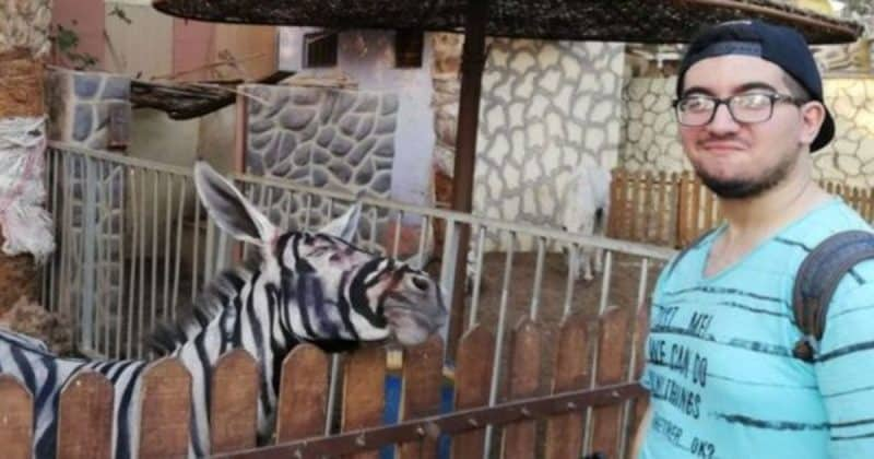 Юмор: Вы уверены, что это зебра? Зоопарк в Египте придумал необычный способ привлечь посетителей