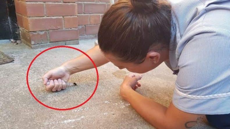 Общество: Милосердная ветеринар покорила всех своим поступком, когда помогла обезвоженной пчеле в жаркую погоду