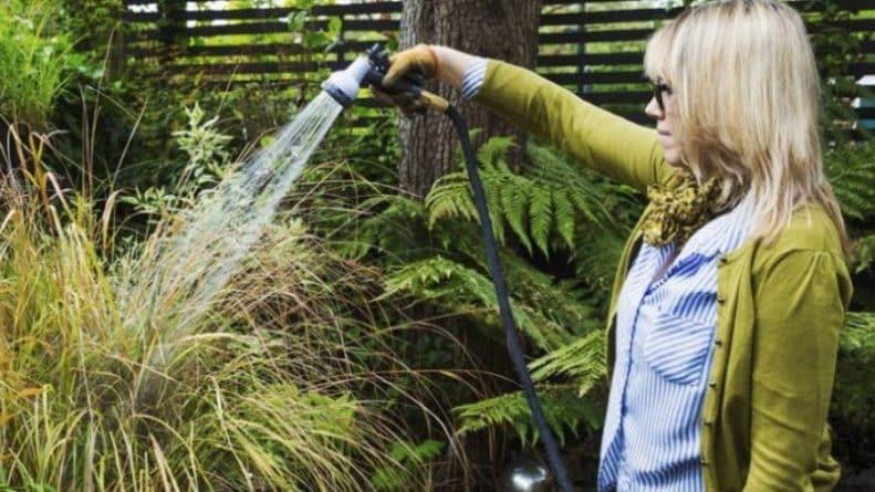 Погода: Жара продолжается: в Великобритании вступил в силу первый запрет на полив растений