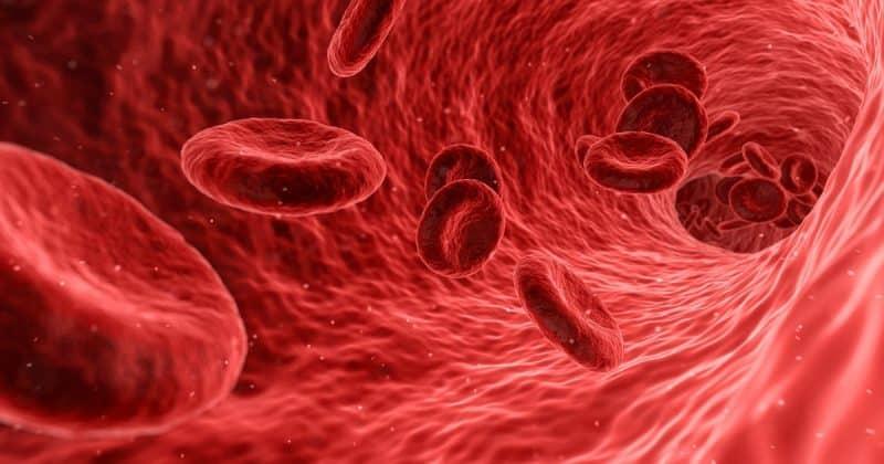 Здоровье и красота: Симптомы дефицита железа: четыре признака, которые могут потребовать изменения диеты