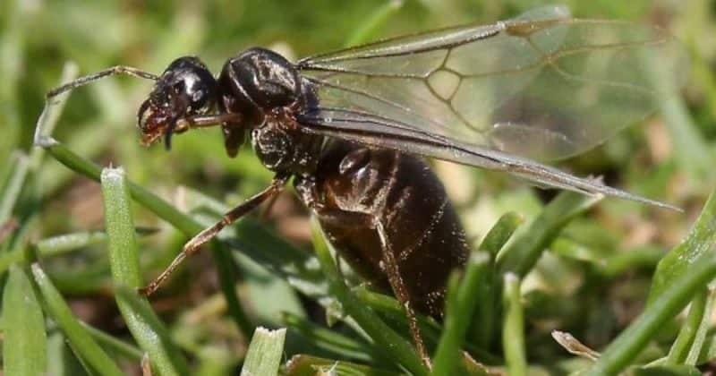 Общество: Грядет День летающих муравьев – вот все, что вам нужно об этом знать