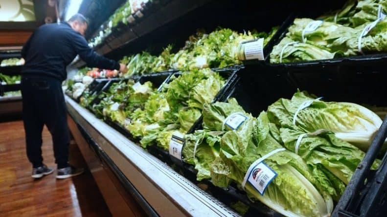 Общество: Из-за жаркой погоды с полок супермаркетов Британии исчезнет латук