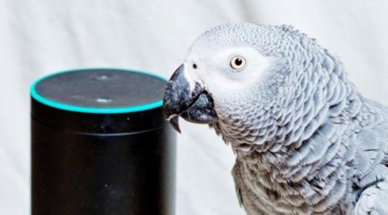 Юмор: Попугай использовал виртуального помощника Alexa для заказа клубники и мороженого