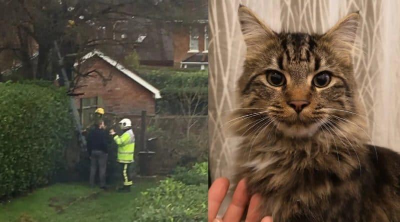 Юмор: Пожарным пришлось снимать с дерева женщину, которая полезла спасать своего кота