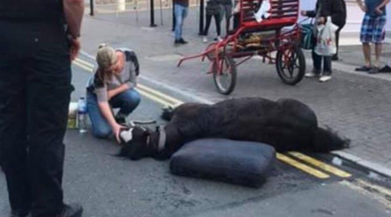 Популярное: Лошадь рухнула от изнеможения на глазах сотен людей