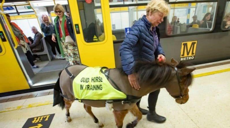Популярное: Первая в Великобритании лошадь-поводырь приехала на поезде в Лондон
