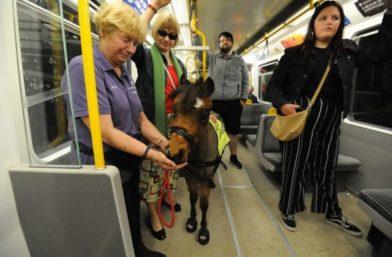 лошадка в поезде