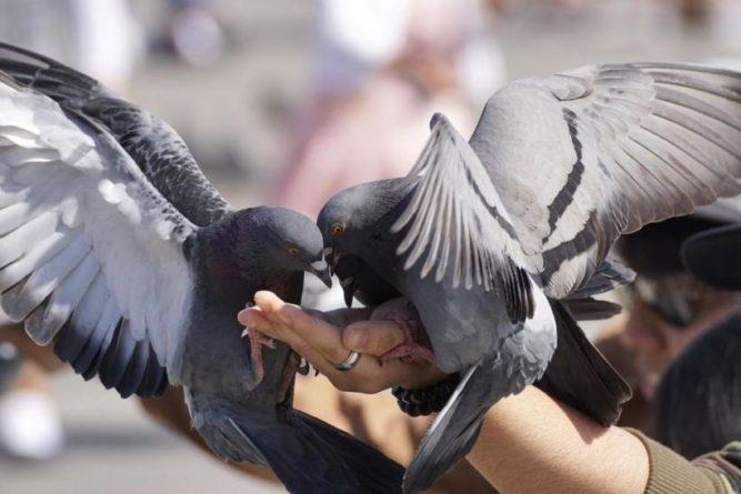Без рубрики: В Британии женщина получила штраф за брошенную голубю сосиску в тесте