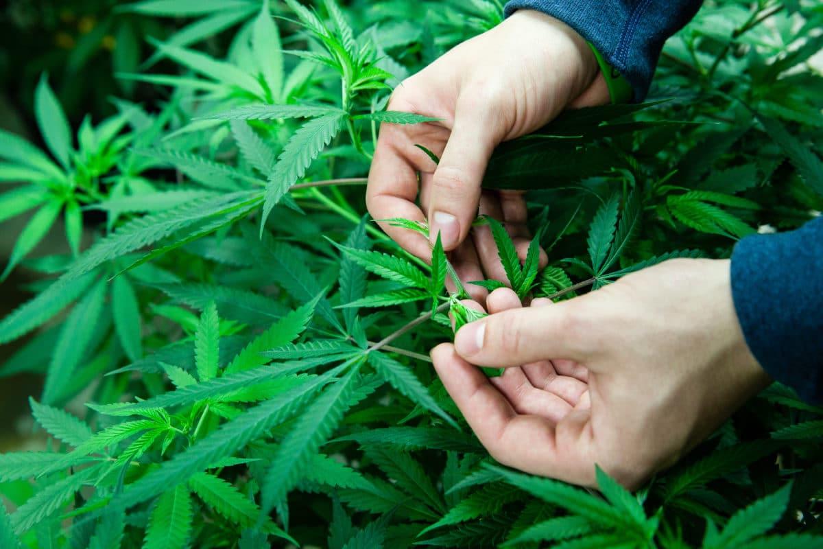 Электричество и конопля склероз марихуана