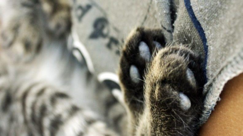 Общество: Английская деревня устроит вечеринку в честь юбилея кота