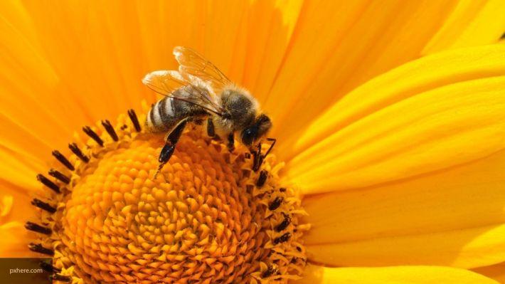 Происшествия: Британская рок-группа выпустила новый альбом в поддержку спасения пчел