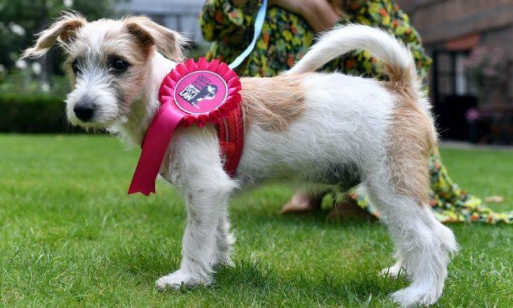 Общество: Премьер-министр Великобритании завел себе собачку