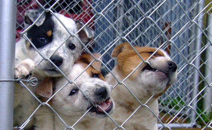 Общество: Частная жизнь британских животных