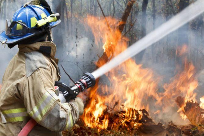 Общество: Неконтролируемый пожар поглотил лес на Тернопольщине: видео испепеляющего ЧП