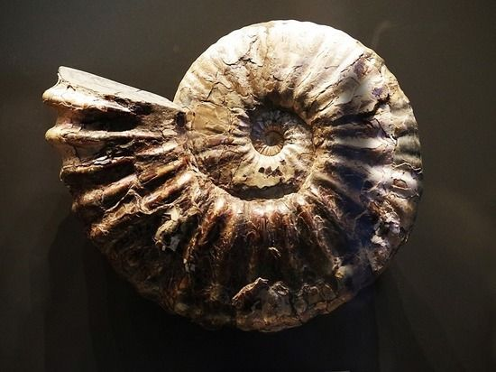 Общество: Обнаружены следы шестого массового вымирания