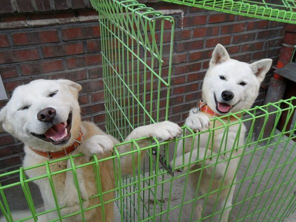 Общество: Собака в доме снижает риск смерти - Cursorinfo: главные новости Израиля