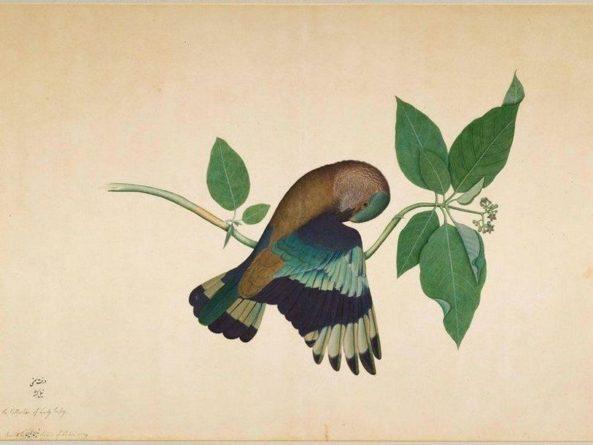 Общество: В Лондоне открылась выставка индийских художников, работавших в Ост-Индской компании