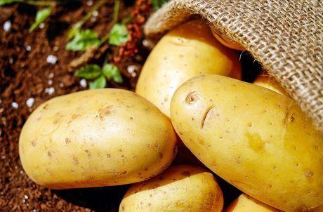 Общество: В Великобритании испытали генномодифицированный картофель