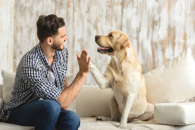 Общество: Как собаки понимают речь хозяев: ученые нашли объяснение