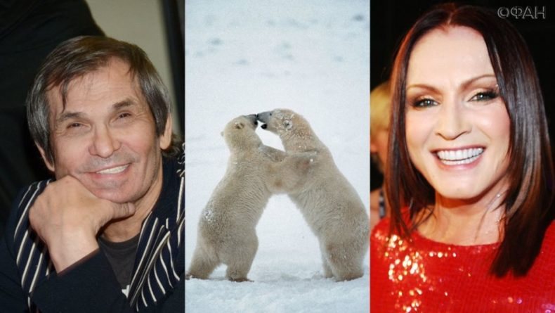 Общество: Алибасов расстался с Ротару из-за белых медведей в Эгвекиноте