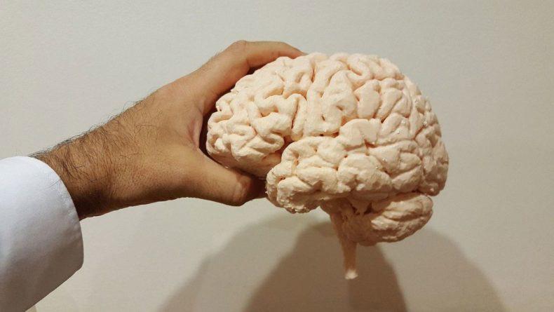 Общество: Биологи рассказали о действии рецепторов памяти и обучения в головном мозге