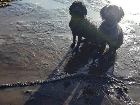 Общество: Две английские собаки на прогулке нашли ихтиозавра