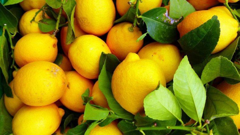 Общество: Ученые: лимон защищает от рака - Cursorinfo: главные новости Израиля