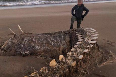 Общество: На побережье Шотландии ураган вынес загадочное морское существо
