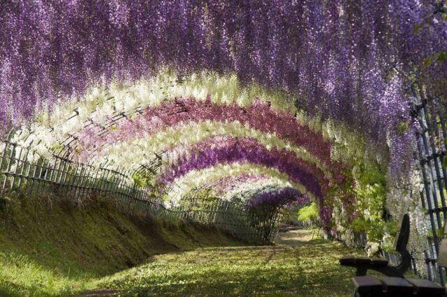 Общество: ТОП-10 самых красивых тоннелей из деревьев в мире (ФОТО)