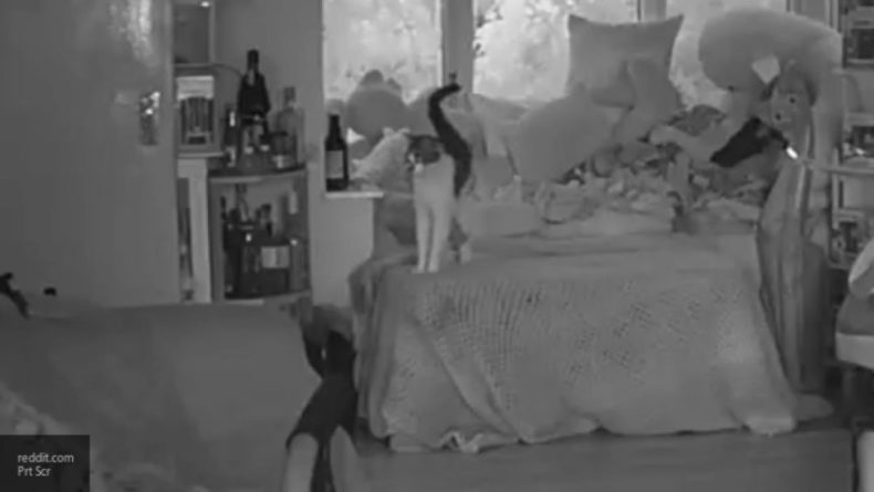 Общество: Британка испугалась призрака своего покойного кота