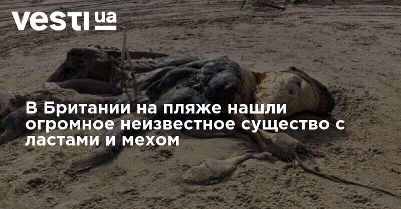Общество: В Британии на пляже нашли огромное неизвестное существо с ластами и мехом