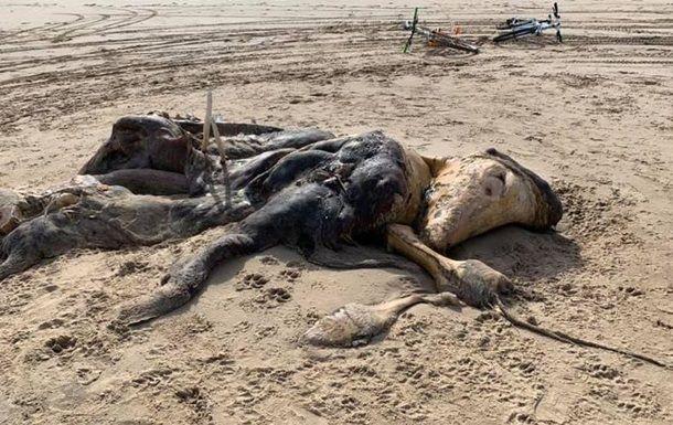 Общество: В Британии на берег выбросило труп неизвестного существа с ластами и мехом
