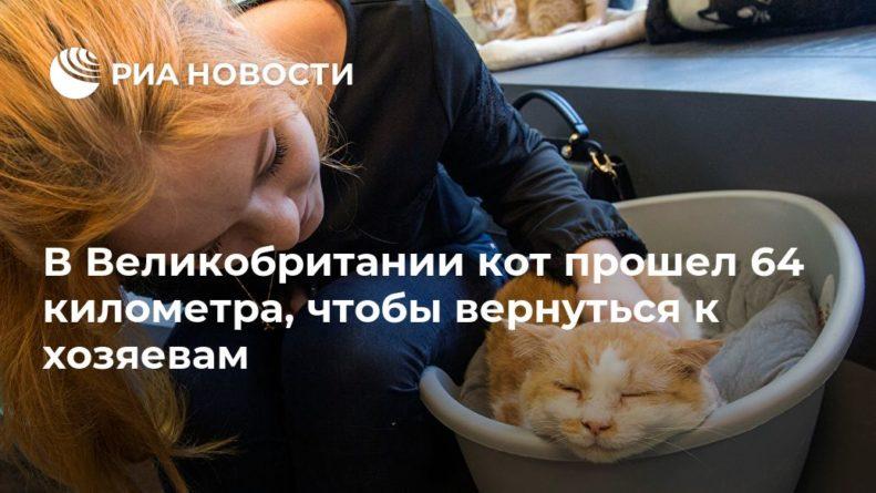 Общество: В Великобритании кот прошел 64 километра, чтобы вернуться к хозяевам