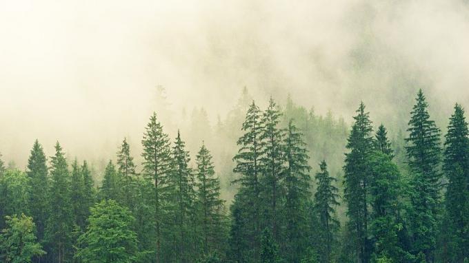 Общество: Глобальное потепление почти удвоило скорость роста лесов в Новой Англии