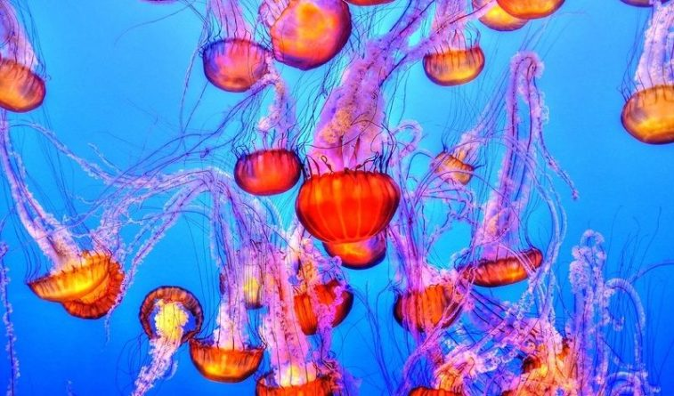 Общество: Пляжи Британии заполонили тысячи ядовитых медуз