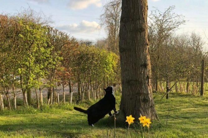 Общество: Главного кота-мышелова МИД Великобритании провожают на пенсию