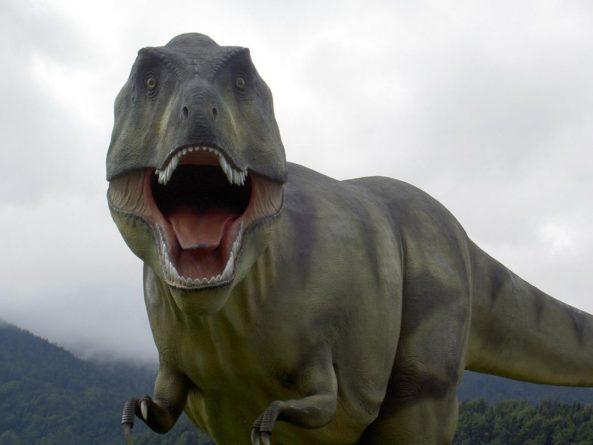 Общество: Житель Англии обнаружил на острове Уайт кости нового вида динозавров из семейства Тираннозавриды
