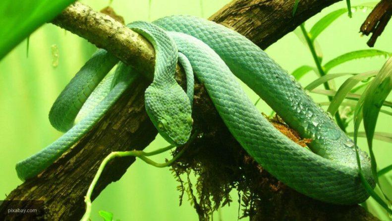 Общество: Британец заменил защитную маску от коронавируса живой змеей