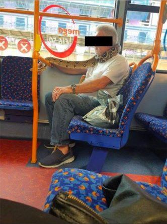 Общество: В Британии пассажир автобуса использовал питона вместо маски: фото и видео
