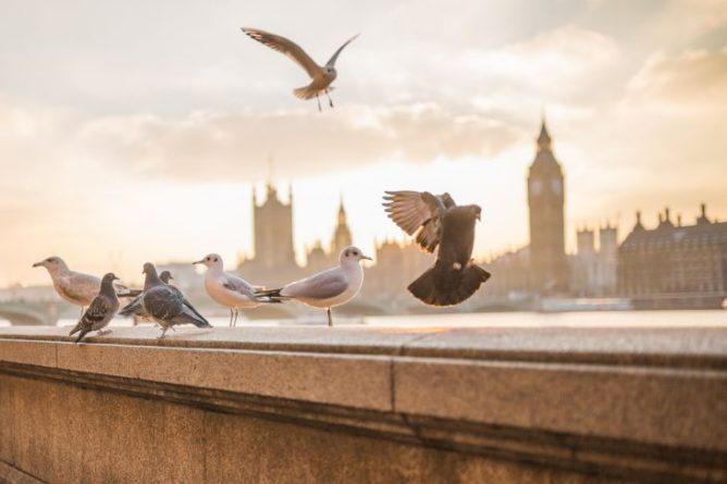 Общество: Озвучен прогноз по коронавирусу для Великобритании. Страна лишится своих свобод